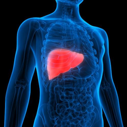 detox lyme disease
